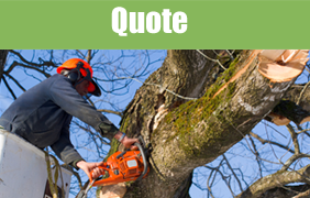 Man Cutting Tree - Tree Felling in Leeds, West Yorkshire